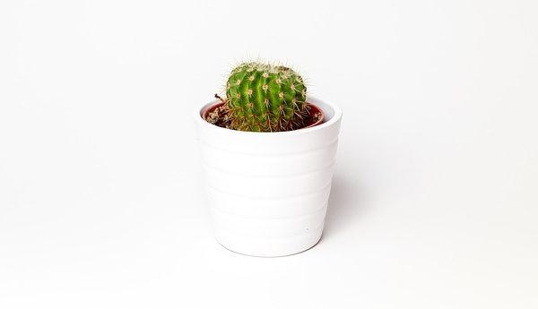 cactus-1842095_640